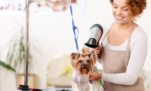 Dog Groomer Benefitting from Elavon's Merchant Services for Specialty Services